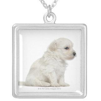 León pequeno de chien o pequeño perrito del perro joyerías