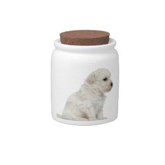 León pequeno de chien o pequeño perrito del perro  jarras para caramelos