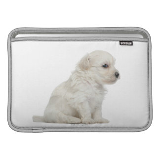 León pequeno de chien o pequeño perrito del perro  funda para macbook air