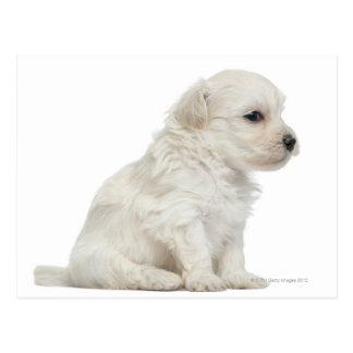 León pequeno de chien o pequeño perrito del perro postal