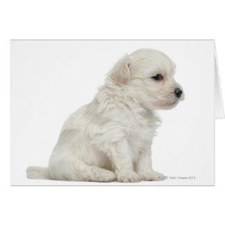 León pequeno de chien o pequeño perrito del perro  tarjeta de felicitación