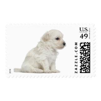 León pequeno de chien o pequeño perrito del perro timbre postal