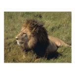 león postal