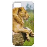 León que miente en una roca iPhone 5 Case-Mate protector