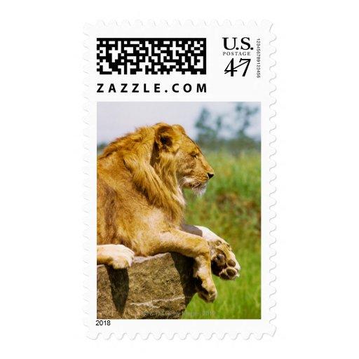 León que miente en una roca timbres postales