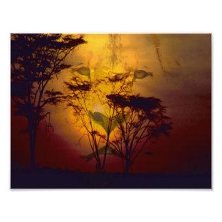 León que mira sobre puesta del sol africana fotografía