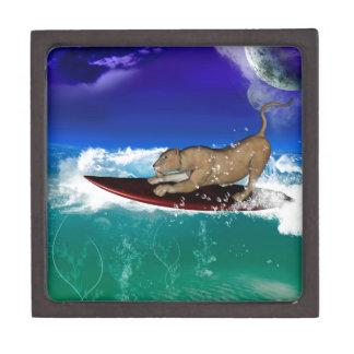 León que practica surf cajas de recuerdo de calidad