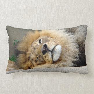 León soñoliento que pega hacia fuera la almohada