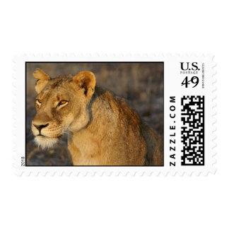 León surafricano sello postal