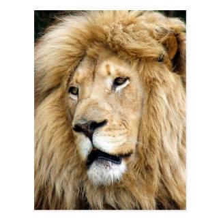 león tarjetas postales