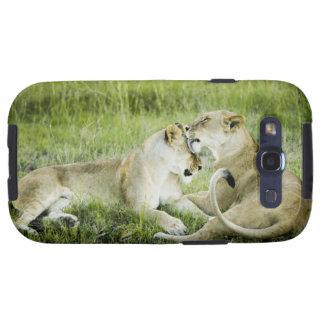 León y leona, África 2 Galaxy S3 Cobertura