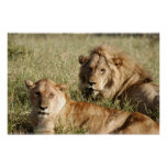 León y leona poster