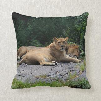 Leona con la foto del león el dormir almohadas