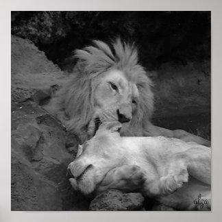 Leona de la preparación del león (poster de la vid