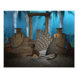 Leona del mar arte fotografico