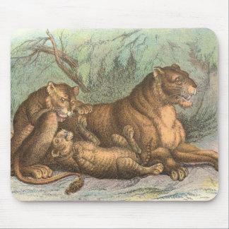 Leona y Cubs, Felis leo Alfombrillas De Raton