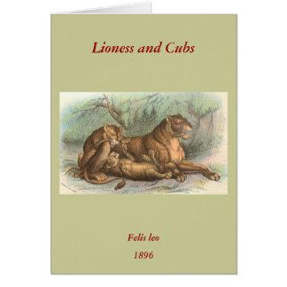 Leona y Cubs, Felis leo Tarjeta De Felicitación