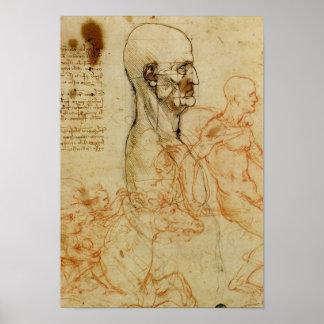 Leonardo Anatomical Study of a Man's Head Poster