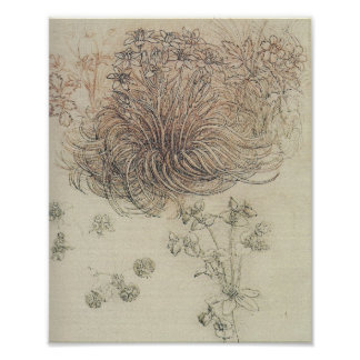 Leonardo Botanical Study Print