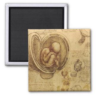 Leonardo da Vinci - estudio de la anatomía Imán Cuadrado