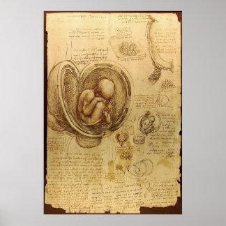 Leonardo da Vinci - estudio de la anatomía Poster