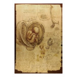 Leonardo da Vinci - estudio de la anatomía Póster