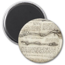 Leonardo da Vinci - Studies of the Arm Artwork Magnet