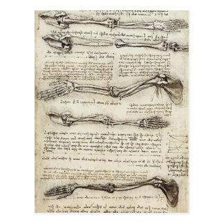 Leonardo da Vinci:Studies of the Arm by the Biceps Postcard