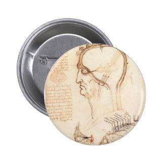 Leonardo Vinci- Comparison of scalp skin and onion Button