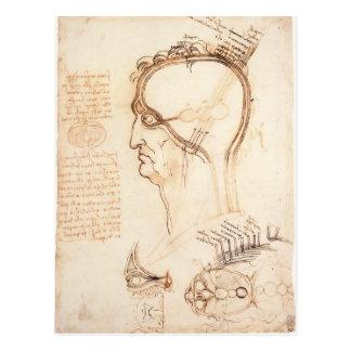 Leonardo Vinci- Comparison of scalp skin and onion Postcards