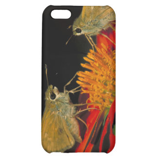 Leonard's skipper butterfly on Mexican sunflower Cover For iPhone 5C