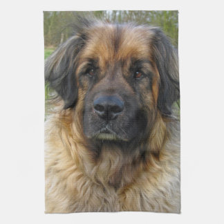 Leonberger dog beautiful photo portrait, gift kitchen towel