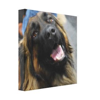 Leonberger Dog Breed Canvas Print