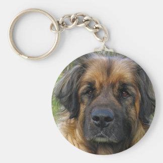 Leonberger dog keychain, beautiful photo, gift keychain