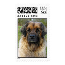 Leonberger dog postage stamp, beautiful photo