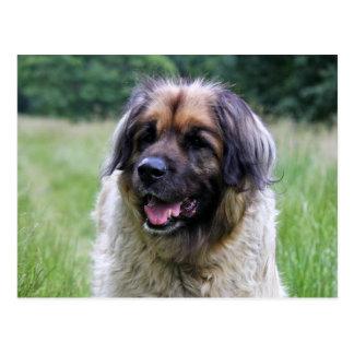 Leonberger dog postcard