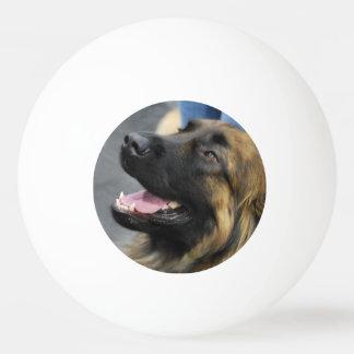 Leonberger Ping-Pong Ball