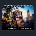 """Leonbergers Calendar<br><div class=""""desc"""">12 month calendar of some of Australia's Leonbergers</div>"""