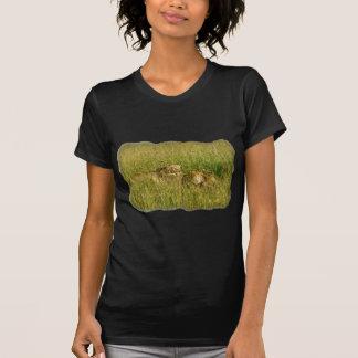 Leones africanos que descansan en hierba de la sab camiseta