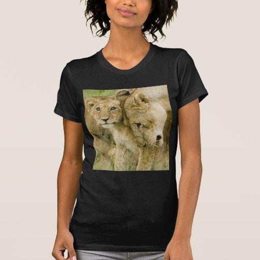 Leones Camiseta