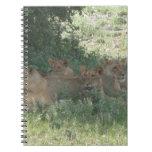 leones cuaderno