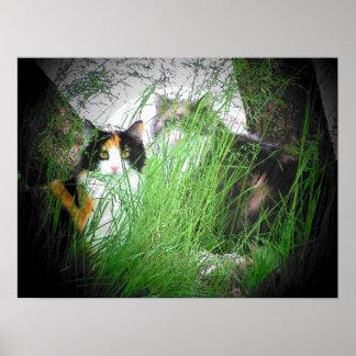 Leones en la hierba posters