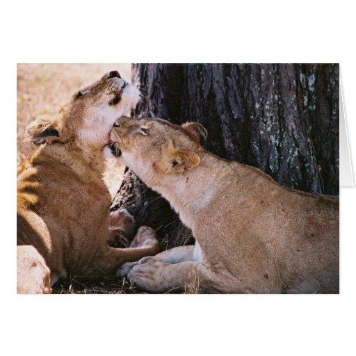 Leones en Serengeti Tarjeta De Felicitación