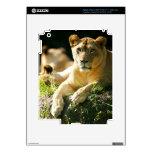 Leones iPad 3 Pegatina Skin