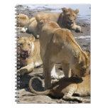 leones libros de apuntes con espiral