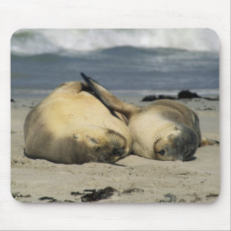 Leones marinos australianos, Neophoca cinerea), Tapetes De Ratón