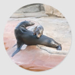Leones marinos de California (californianus del Za Pegatina