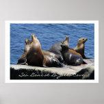 Leones marinos de la ensenada de La Jolla Posters