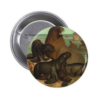 Leones marinos de los animales de la vida marina d pins