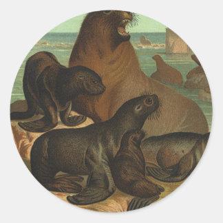 Leones marinos de los animales de la vida marina pegatinas redondas
